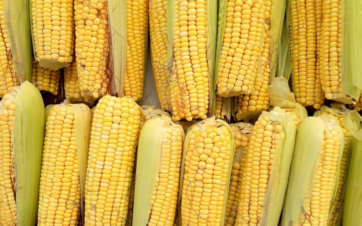 corn in arabic